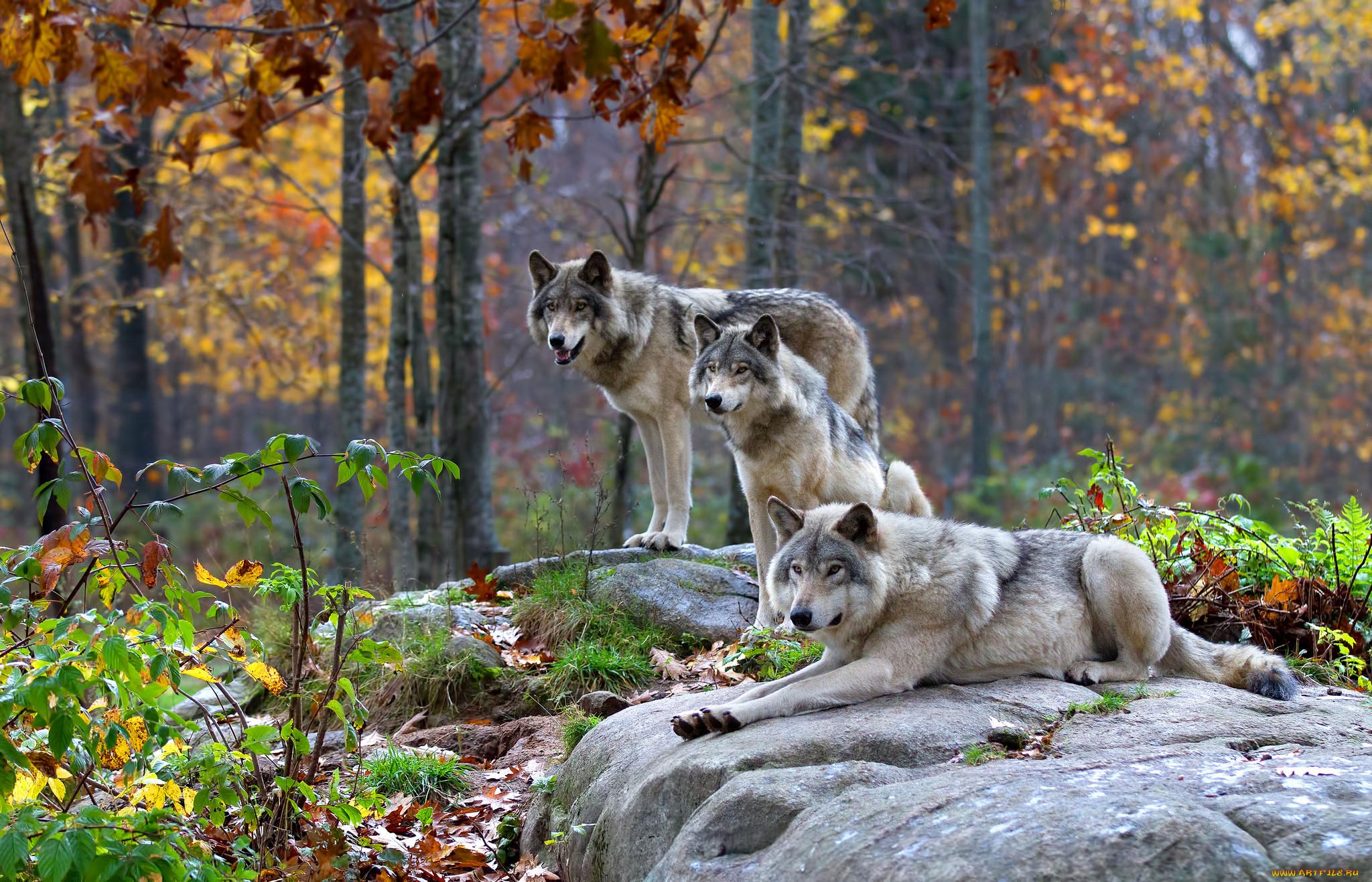 Картинки природы россии о животных